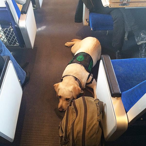 Hundhjälpen Uppland Assistanshund