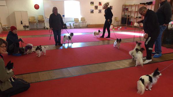Hundhjälpen i Uppland Träningslokal i Kvarnen