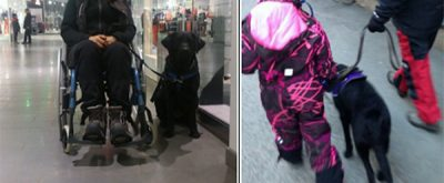 epilepsihund assistanshund hundhjälpen