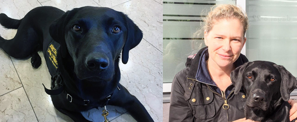 Hundhjälpen i Uppland Träningsplaner