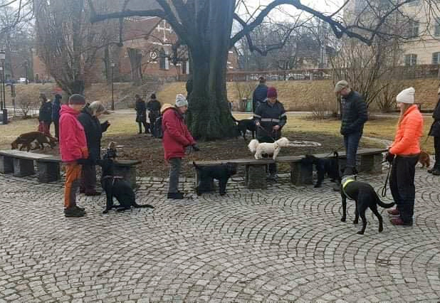 hundslinga drop-in promenad