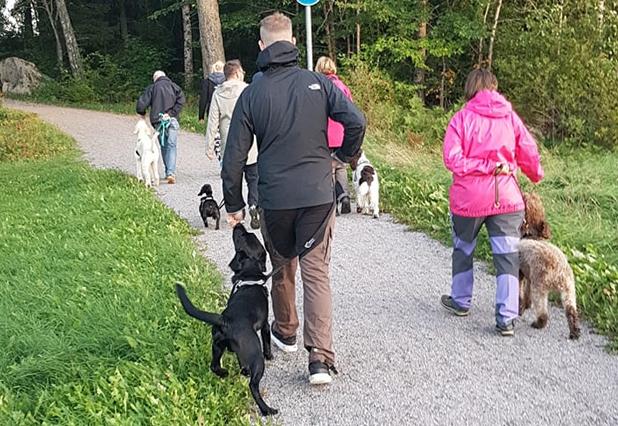 social hundpromenad