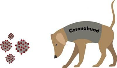 coronahund