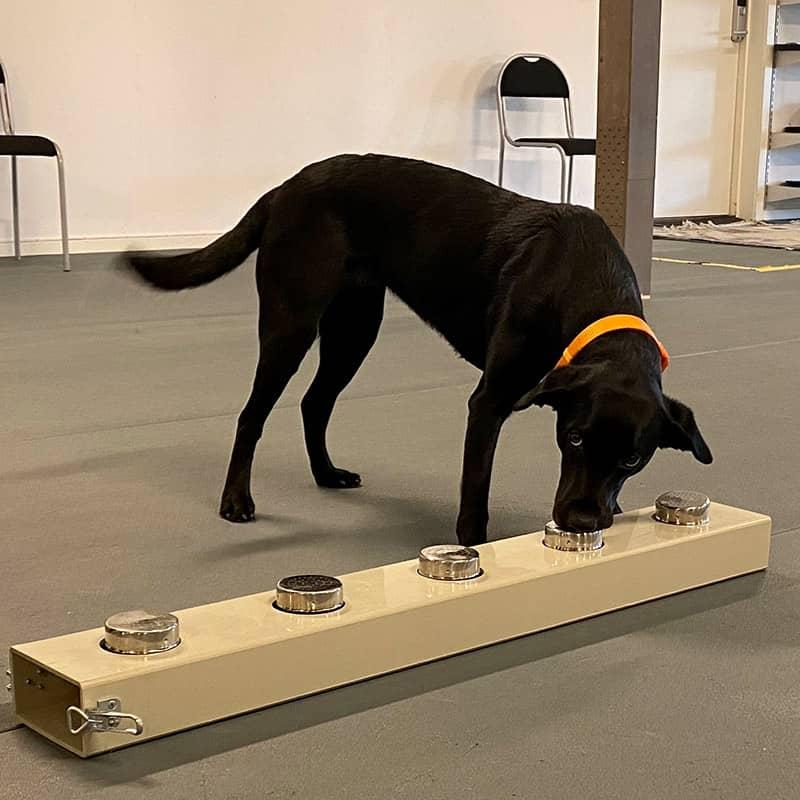 Hundhjälpen i Uppland urvalsbana