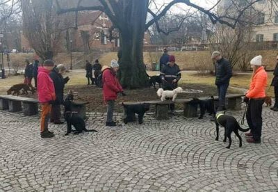 Hundhjälpen i Uppland Instruktörsledd träning